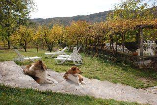 Il Cornacchino accoglie volentieri i cani in vacanza