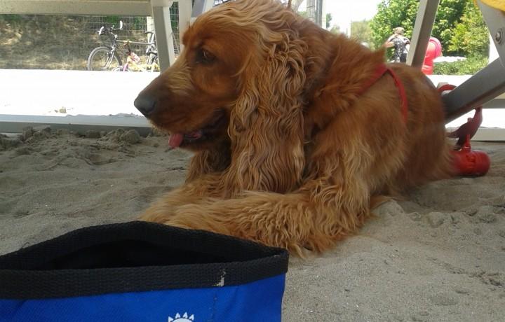 Il Camping Vigna sul Mar accetta cani gratuitamente