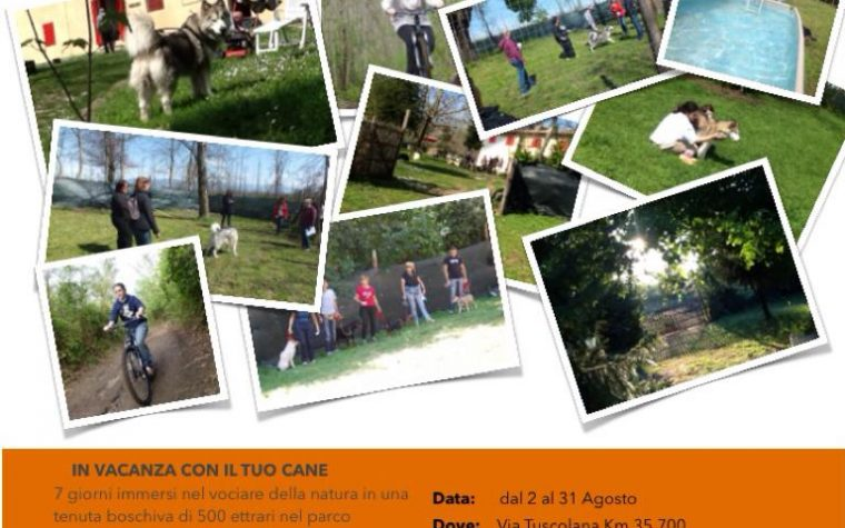 Dog Camp a Rocca Priora