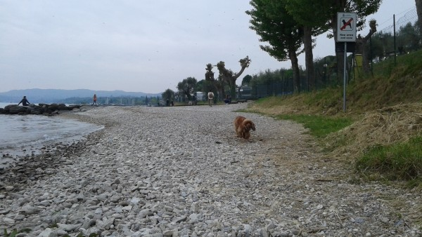 spiaggia cani garda Moniga