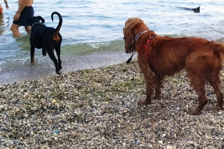 Braccobaldo beach a Peschiera del Garda per una vacanza a quattro zampe